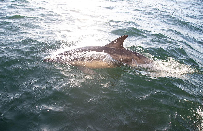 Accompagnés par les dauphins