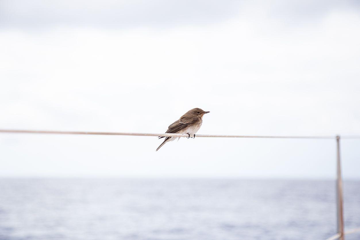Un passager clandestin à plus de 200 milles des côtes... Il restera toute la journée à bord. Et votre ticket m'sieur Oiseau ?!