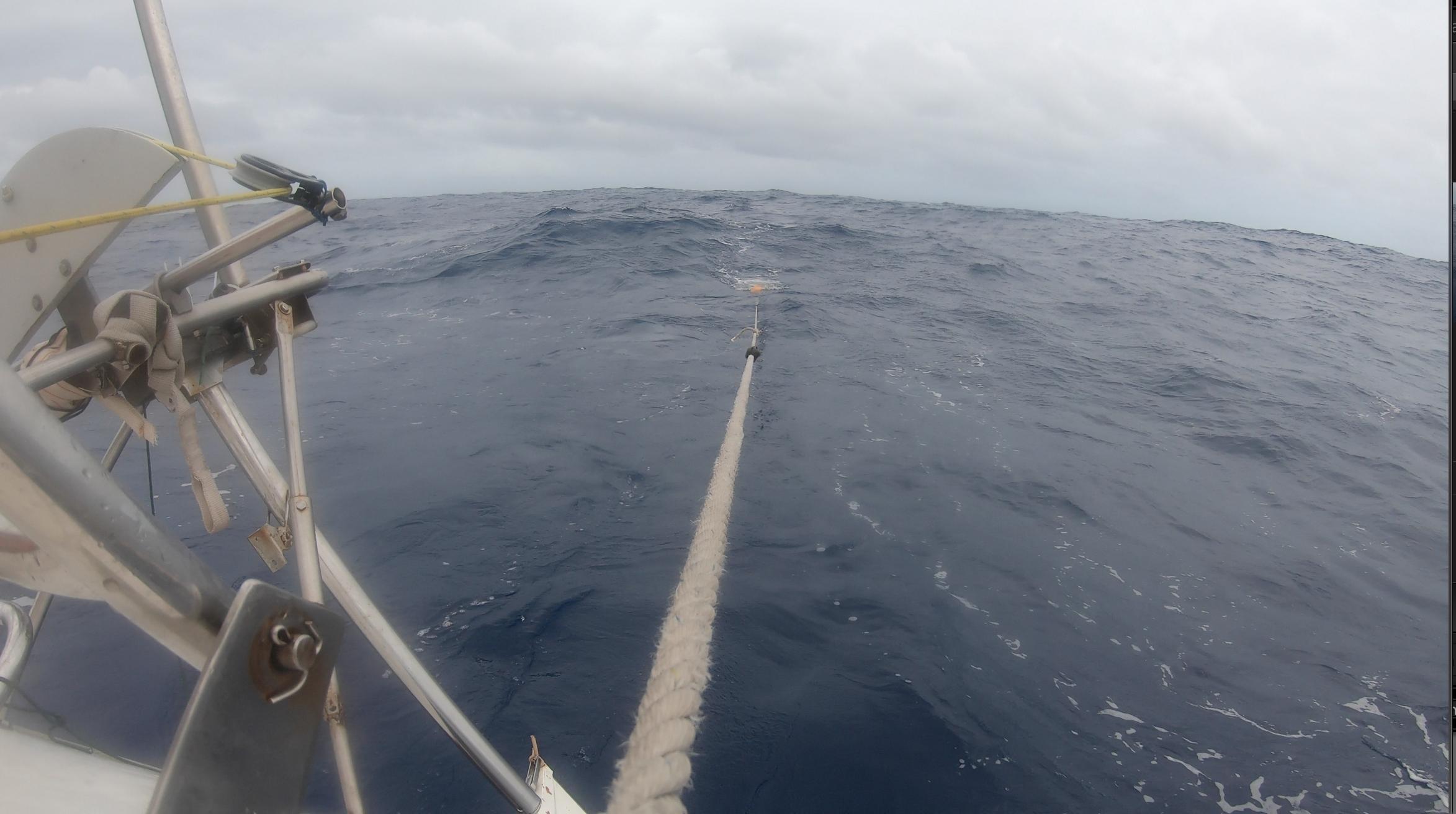 Le filet à plancton est à l'eau, c'est parti pour 15 min de prélèvement à vitesse réduite de 2-3 noeuds. Pour respecter cette vitesse, nous enroulons le génois jusqu'à... ce qu'on soit à sec de toile... l'atlantique est un vrai tapis roulant!