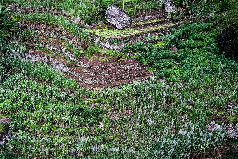 Les cultures en terrasses pour cultiver malgré les fortes pentes. Cannes à sucre, mais, ...
